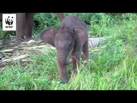 Community Post: Baby Elephant Trying Out Her Trunk