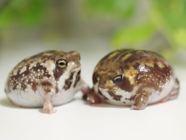Community Post: 20 Rain Frogs That Have Had It With This Week