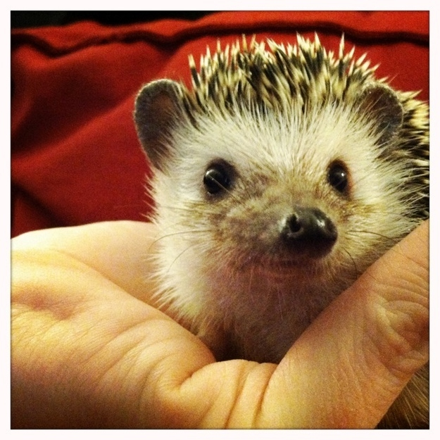 Community Post: Ever Seen A Dreaming Hedgehog?