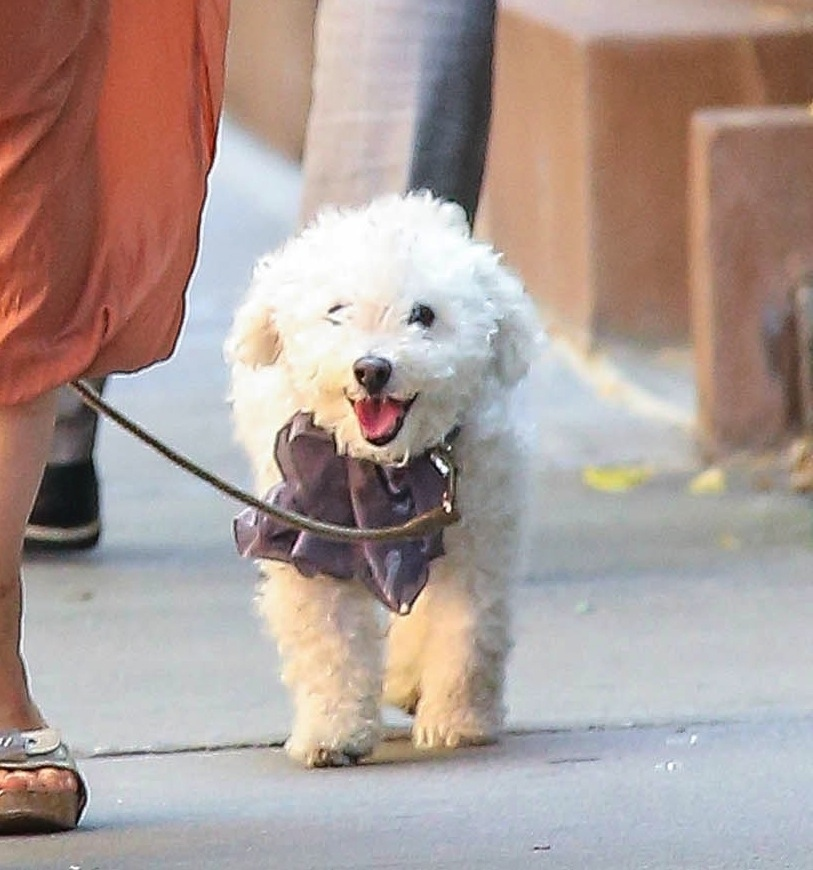 Parker Posey And Her Ridiculously Adorable Dog Take A Walk