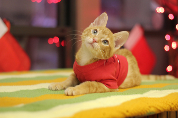 The Heartwarming Story Of Stockings The Kitten