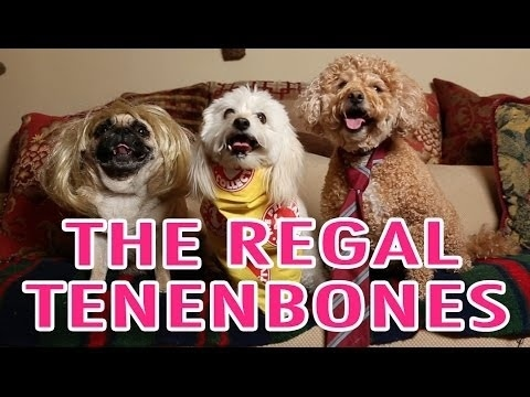 Community Post: Wes Anderson's The Royal Tenenbaums With Dogs