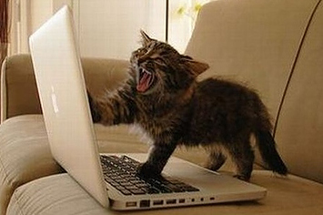 Community Post: Cats Using Your Laptop