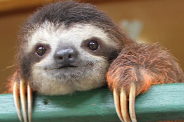The American Revolution, As Told By Sloths