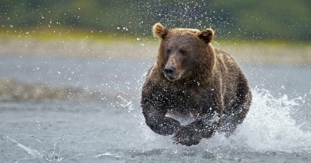 9 More Curious Facts About Bears