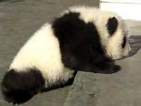 Community Post: Frustrated Baby Panda Can't Get Up The Steps