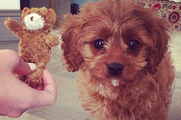 Cute Alert: Katy Perry Got A Puppy
