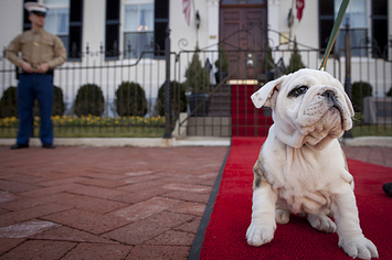 Meet Chesty, The US Marine Corps' New Mascot