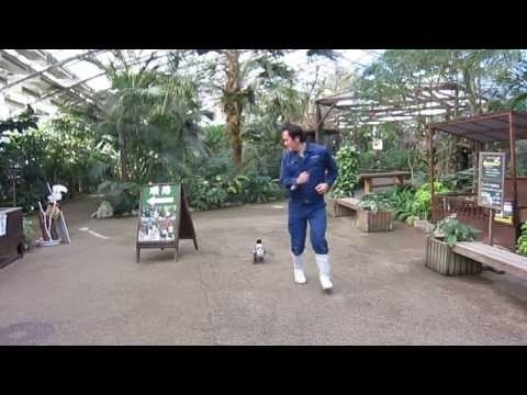 Community Post: Naughty Baby Penguin Chases Zookeeper