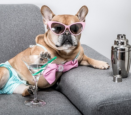 21 Photos Of Your New Favorite Frenchie