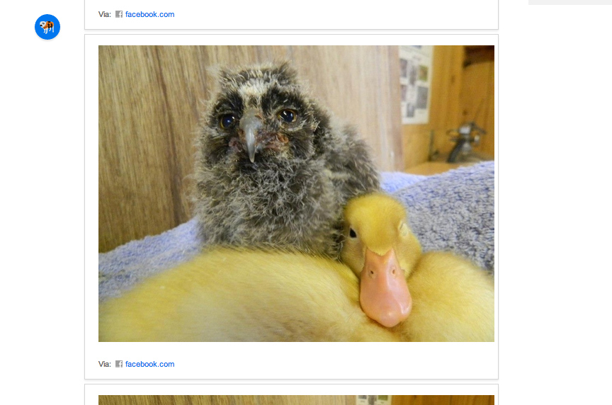 Owl And Duck Best Are BFFs