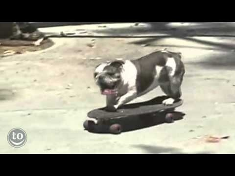 Community Post: Skateboarding Animals