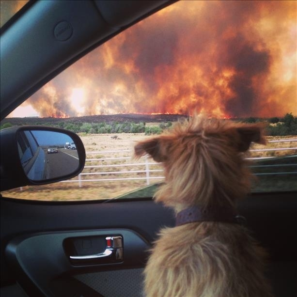 Heartbreaking Photo Of A Dog Watching The Yarnell, Ariz., Wildfire