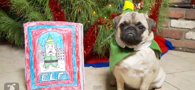 """Community Post: """"Elf"""" The Movie In 2 Minutes With Pugs As Told By A Little Boy"""
