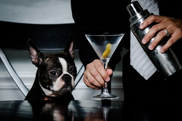 8 Animals Getting Ready For Mad Men