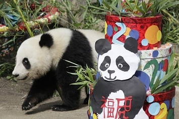 Fu Hu Turns Two: Baby Panda Birthday Party!