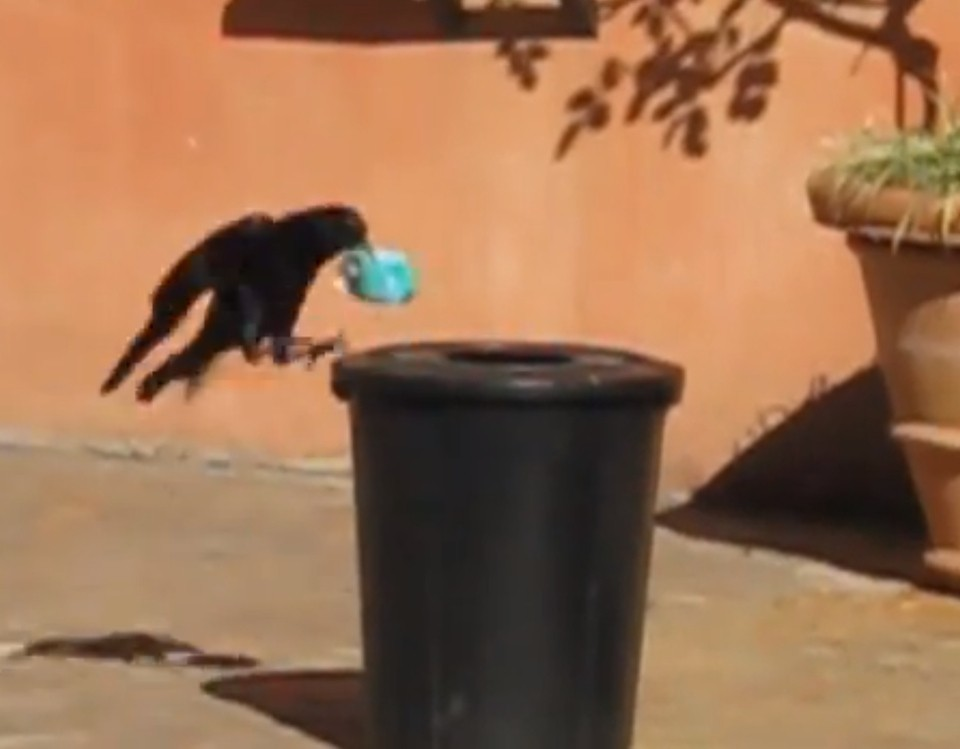 Crow Recycles, Is A Hero To Us All