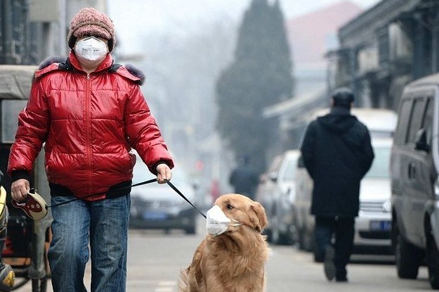 12 Wonderful (And Weird) Ways To Tackle Pollution in China