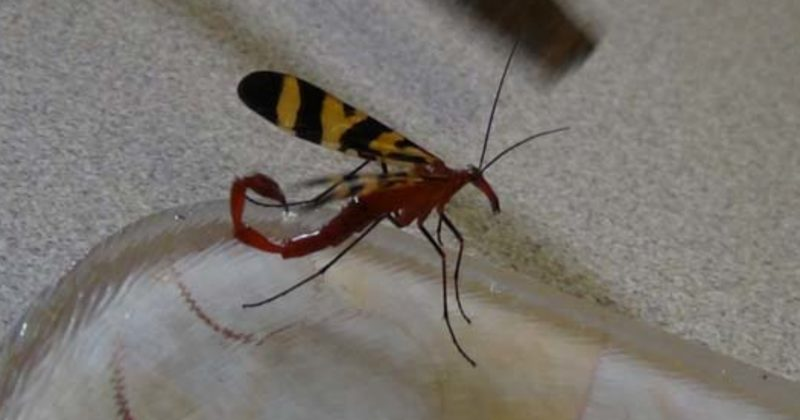 In Australia, I Think This Horrible Creature Would Be Considered A Butterfly