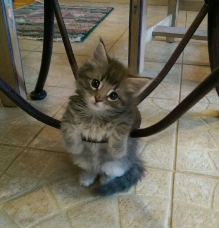 Very photogenic kitten!