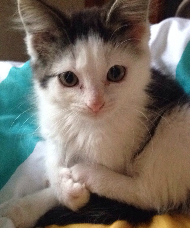 Bandit The Kitten Was Rescued Just In Time To Steal Your Heart