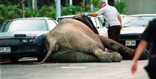 10 Famous Elephants and Their Bizarre Deaths