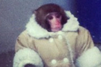 The IKEA Monkey Has Already Shot His First Ad
