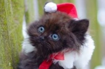 The Second Cat Of Christmas